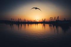 Vue aérienne de port maritime de Varna et de grues industrielles, Bulgarie Photographie stock libre de droits