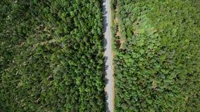 Vue aérienne de route par le tir de verticale de forêt banque de vidéos
