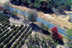 Vue aérienne de route rurale avec un arbre coloré et sec photos libres de droits