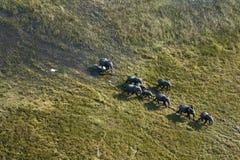 Vue aérienne de troupeau d'éléphant africain Image libre de droits