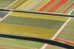 Vue aérienne de tulipe dans un domaine d'ampoule de fleur en Hollande Images stock