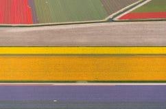 Vue aérienne de tulipe dans un domaine d'ampoule de fleur en Hollande Photos stock