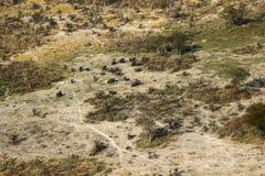 Vue aérienne des éléphants africains Image libre de droits