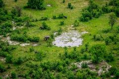 Vue aérienne des éléphants dans l'Okavango image stock