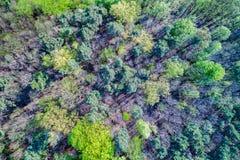 Vue aérienne des arbres au Palatinat Forest Rhineland-Palatinate, Allemagne photo libre de droits