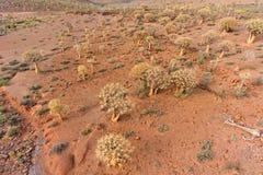 Vue aérienne des arbres de tremblement Image stock