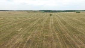 Vue aérienne des balles de foin dans le domaine d'agriculture dans rural La Russie, Stavropol banque de vidéos