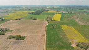 Vue aérienne des champs du Belarus en mai avec des gisements de graine de colza banque de vidéos
