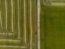 Vue aérienne des champs verts répandus avec du riz, créant une texture pour un fond photos stock