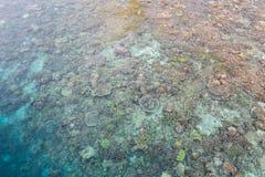 Vue aérienne des coraux peu profonds en Raja Ampat images libres de droits