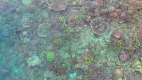 Vue aérienne des coraux sains et colorés en Raja Ampat banque de vidéos