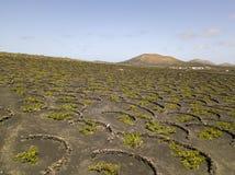 Vue aérienne des cultures de vin sur les sols volcaniques de l'île de Lanzarote Les Îles Canaries, Espagne Production vinicole  photos stock