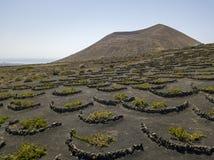 Vue aérienne des cultures de vin sur les sols volcaniques de l'île de Lanzarote Les Îles Canaries, Espagne Production vinicole  images libres de droits