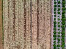 Vue aérienne des gisements de riz image stock