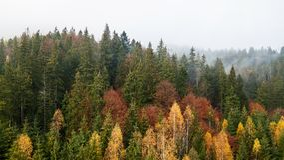 Vue aérienne des montagnes avec un brouillard de matin Image stock