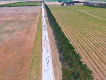 Vue aérienne des moutons sur la route d'intérieur Images stock