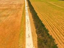 Vue aérienne des moutons sur la route d'intérieur Image libre de droits