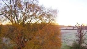 Vue aérienne des paysages et des arbres clips vidéos