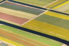 Vue aérienne des tulipes dans un domaine d'ampoule de fleur, Pays-Bas photographie stock libre de droits