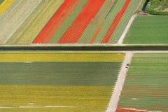 Vue aérienne des tulipes dans un domaine d'ampoule de fleur, Pays-Bas Images stock