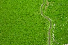 Vue aérienne des zones vertes Photographie stock