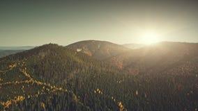 Vue aérienne en bois conifére des montagnes de poutre du soleil banque de vidéos