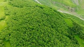 Vue aérienne fantastique des montagnes couvertes de vue verte de forêt d'en haut Kazbegi, Stepantsminda banque de vidéos