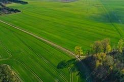 Vue aérienne sur le paysage du champ de blé vert divisé par la route images libres de droits