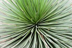 Vue abstraite d'usine de cactus image stock