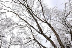 Vue abstraite de l'hiver Images libres de droits
