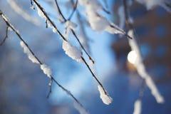 Vue abstraite de neige d'hiver sur des branches d'arbre Images libres de droits