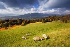 Vue alpine d'automne ensoleillé avec le troupeau des moutons Images stock