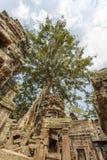 Vue antique de temple de Prohm de ventres, Angkor Thom, Siem Reap, Cambodge Image libre de droits