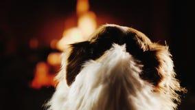 Vue arrière : équipez les courses son chien, qui regarde le feu dans la cheminée Chaleur et confort dans le concept de maison Images stock