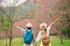 Vue arrière d'encourager heureux d'amis de gagnant Image libre de droits