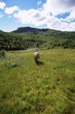 Vue arrière de cheval d'équitation de jeune femme photo stock