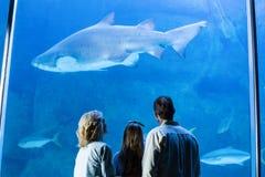 Vue arrière de famille observant les poissons de réservoir Photo libre de droits