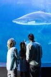 Vue arrière de famille observant les poissons de réservoir Photos stock