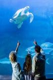 Vue arrière de famille se dirigeant à la tortue dans un réservoir Photographie stock libre de droits