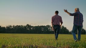 Vue arrière de fils adulte et vieux de père marchant sur le gisement de paille ou de seigle, ferme d'agriculture de récolte, deux banque de vidéos