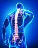 Vue arrière de l'anatomie de la douleur dorsale masculine dans le bleu Photos libres de droits