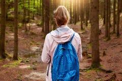 Vue arrière de voyageur énergique allant dans une direction, ayant l'aventure dans la forêt, appréciant la nature et l'air frais, images libres de droits