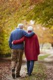 Vue arrière des couples supérieurs marchant le long d'Autumn Path images libres de droits
