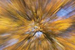 Vue artistique sur un bel arbre avec des branches pleines d'éclater les feuilles d'automne oranges et jaunes image libre de droits