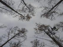 Vue ascendante des arbres d'automne image libre de droits