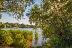 Vue attrayante au-dessus d'un petit lac entre les branches de l'overha Image libre de droits