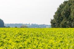 Vue au-dessus d'un champ végétal vert Photographie stock libre de droits