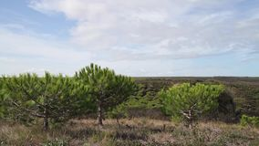 Vue au-dessus de countrl sec et poussiéreux avec des buissons et de paysage de colline à l'arrière-plan banque de vidéos