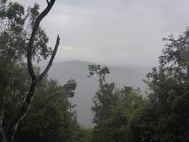 Vue au-dessus de la forêt tropicale Images stock
