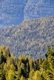 Vue au-dessus des forêts coniféres Image stock